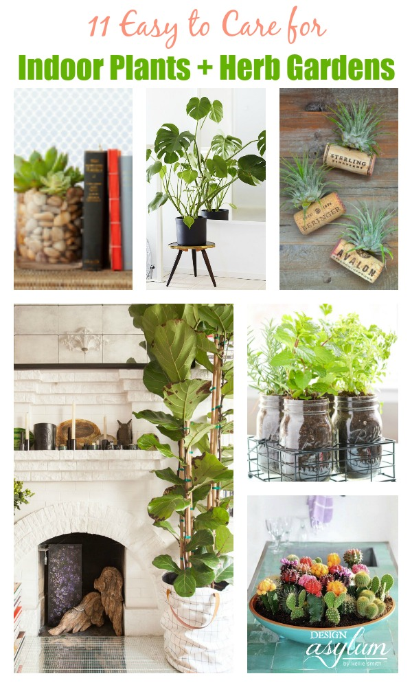 11 easy to care for indoor plants herb gardens design for Easy to take care of plants